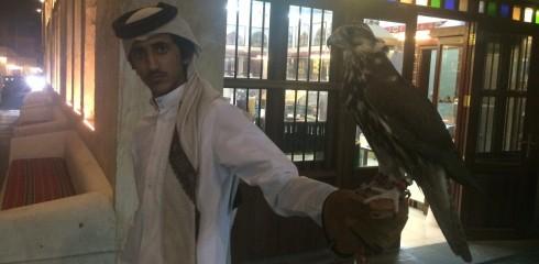 falcon - souk 6